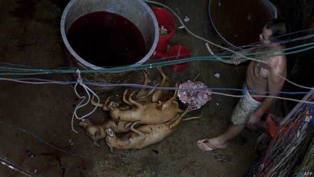 Cocinando perros