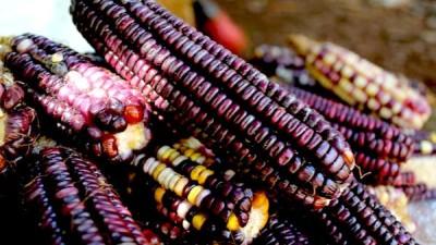 El precio del maíz sube sin tregua en los pueblos mayas