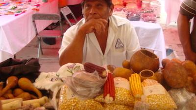 Arranca la Feria de las semillas nativas en Yucatán