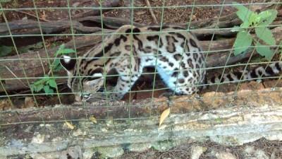 Decomisan 6 animales al Cenote Turístico de Valladolid