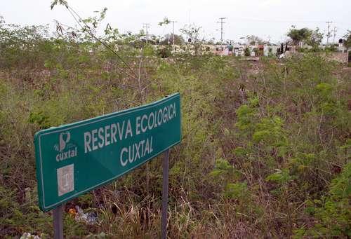 """Foto de la Jornada de marzo de 2011. El pide dice: """"Aspecto de la zona ecológica de Cuxtal, ubicada al sur de Mérida, donde se pueden observar viviendas construidas talando el monteFoto Luis A. Boffil"""""""