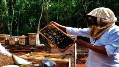 Apicultores mayas combaten al escarabajo de las colmenas pero requieren ayuda