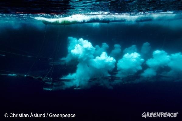 Explosiones marinas en busca de reservas de petróleo en el Ártico. Foto de Greenpeace