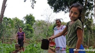 """""""Todo"""" sobre la consulta a los pueblos mayas y los transgénicos"""