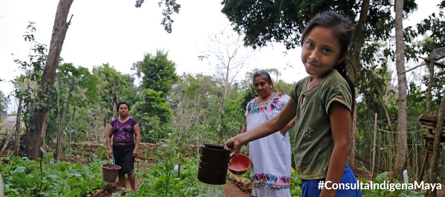 Los pueblos mayas deciden qué cultivas en su territorio