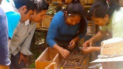 Clima y plagas, los mayores desafíos en la conservación de las abejitas meliponas