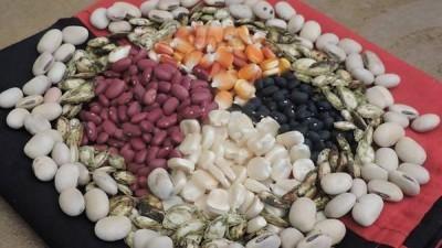 La feria de semillas mayas, un pacto con la vida