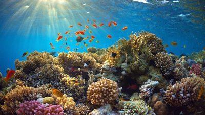 La exploración petrolera alcanza al Arrecife Alacranes