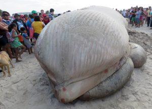 Ballena de aleta que recaló en Progreso, Yucatán
