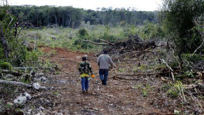 """Casi inevitable: los mayas dejarán la """"consulta indígena"""" en Campeche por ser una farsa"""