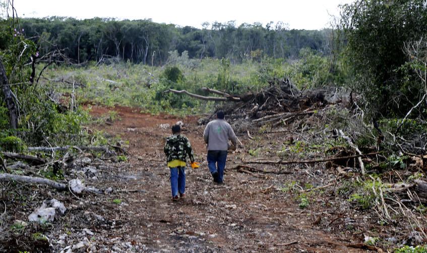 Robin Canul / Señales de la deforestación