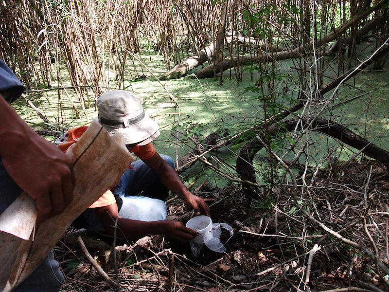 Lorenzo Escalante y su equipo colectando microrganismos en una aguada
