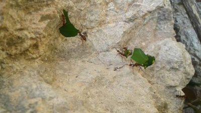 El diagnóstico de las hormigas: terror a la diabetes