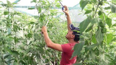 """Joven mayahablante de Maní contador de las """"cabañuelas"""" recibe el doctorado"""