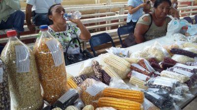 Presentan resultados del Xok K'iin en la feria de las semillas en Xocen