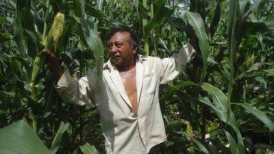 Justicia federal ordena consultar a los pueblos mayas para activar el ASPY 2030 en la Península de Yucatán
