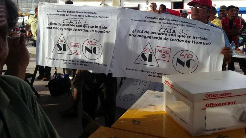 "Rotundo ""no"" a la megagranja porcícola en Homún, según referéndum"