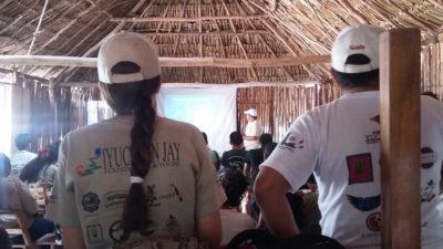 Los pájaros son las primeras víctimas de los megaproyectos eólicos en Yucatán