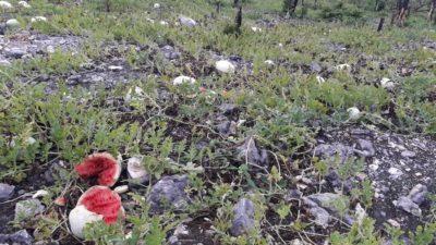Fumigaciones aéreas de rico empresario matan cultivos y abejas en Dzonot Carretero