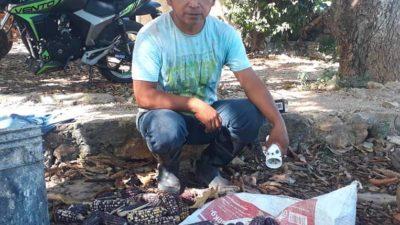 """Campesino maya inventa una divertida """"desgranadora personal"""" que no deja ampollas"""