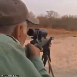 Indigna cazador de león