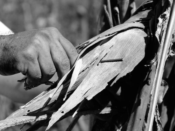"""Fotógrafa de Ticul registra lo """"maravilloso"""" de la milpa maya"""